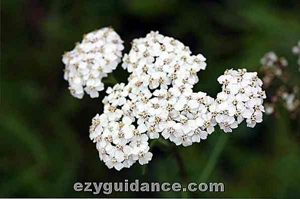 15 Mind Blowing Reasons To Go & Find Yarrow Right Now