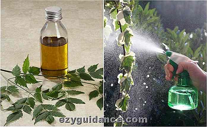 Hvordan Neem Oil Works Wonders For Plants & Garden