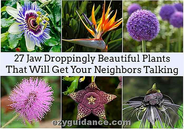 27 Jaw Dropende Beautiful Plants som får dine naboer å snakke