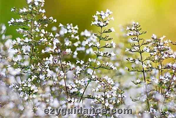 20 belles fleurs pour attirer les abeilles dans votre jardin. Black Bedroom Furniture Sets. Home Design Ideas