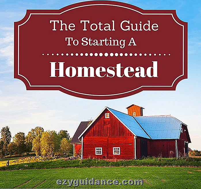 Der Total Guide zum Start eines Homestead