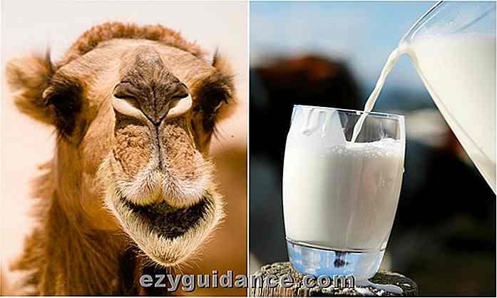 diabetes de leche de camello