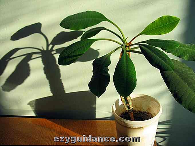 14 piante dappartamento che prosperano in condizioni di scarsa